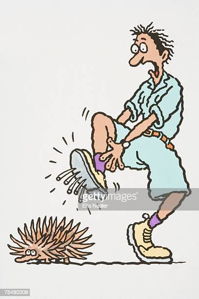 comical depiction of male explorer leaping in pain with spines of echidna poking through sole of boot - echidna stock illustrations
