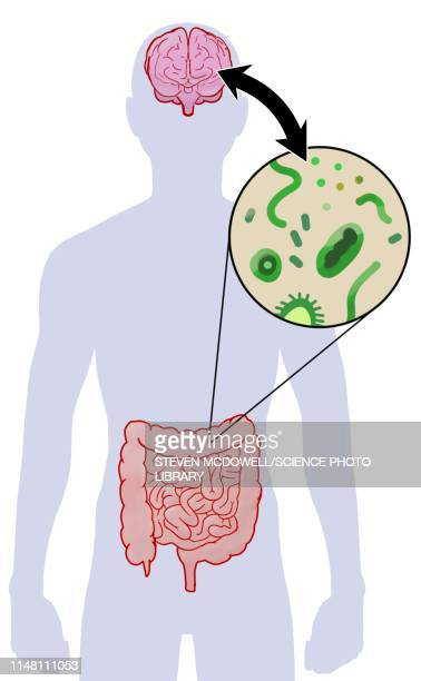communication between brain and microbiome, illustration - microbiology stock illustrations