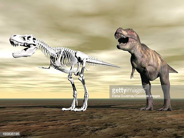 comparison of tyrannosaurus rex standing next to its fossil skeleton. - animal spine stock illustrations, clip art, cartoons, & icons