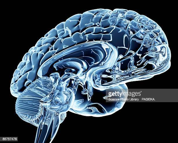 Computer artwork of human brain