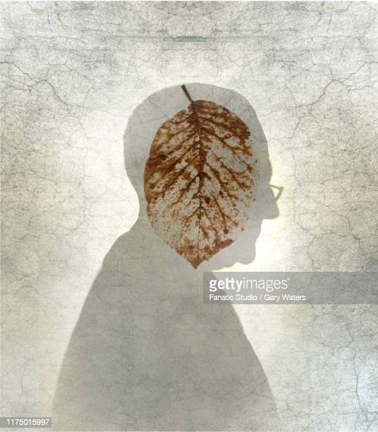stockillustraties, clipart, cartoons en iconen met concept image of a disintegrating leaf inside an elderly man's profile over a distressed textured background depicting ageing and associated psychological and physical issues - ziekte van alzheimer