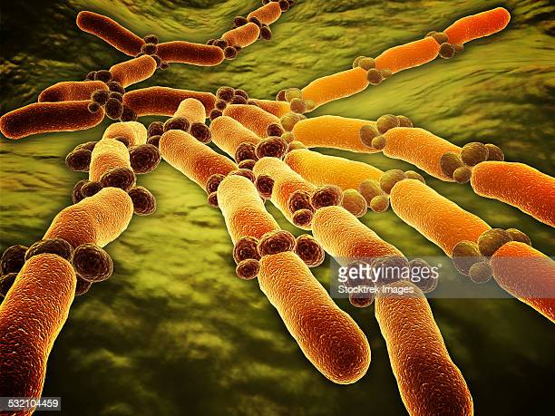 conceptual image of candida albicans. - dermatology stock illustrations