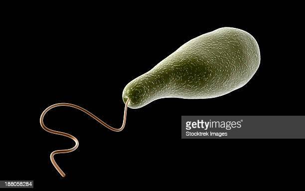 conceptual image of euglena. - model organism stock illustrations