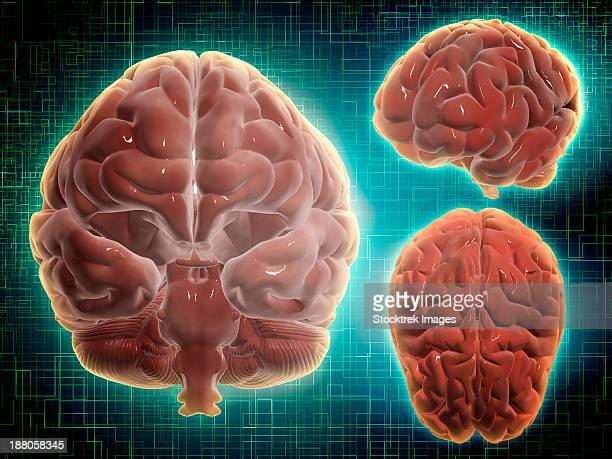 ilustrações, clipart, desenhos animados e ícones de conceptual image of human brain at different angles. - lobo temporal