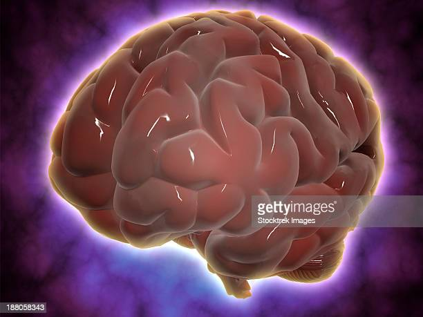 conceptual image of human brain. - temporal lobe stock illustrations, clip art, cartoons, & icons