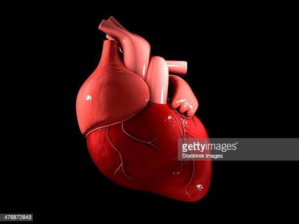 conceptual image of human heart. - physiology stock illustrations, clip art, cartoons, & icons