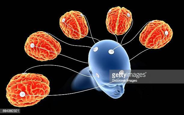 ilustrações, clipart, desenhos animados e ícones de conceptual image of multi-brain processing. - lobo temporal