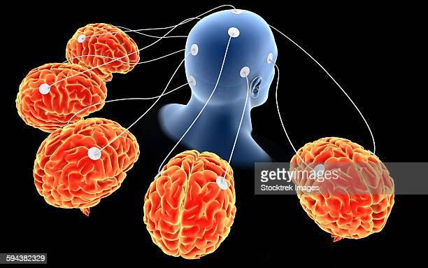 conceptual image of multi-brain processing. - temporal lobe stock illustrations, clip art, cartoons, & icons