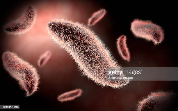 conceptual image of paramecium. - model organism stock illustrations