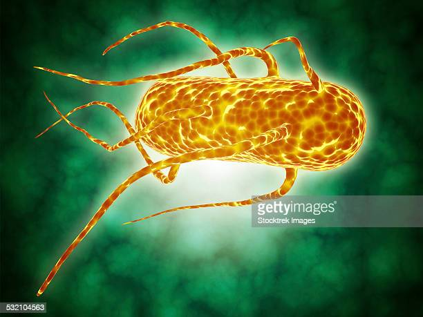 conceptual image of salmonella. - anaerobic stock illustrations, clip art, cartoons, & icons