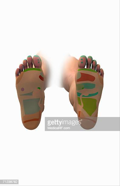 conceptual image of the reflexology map of the feet. - lying on back stock illustrations, clip art, cartoons, & icons