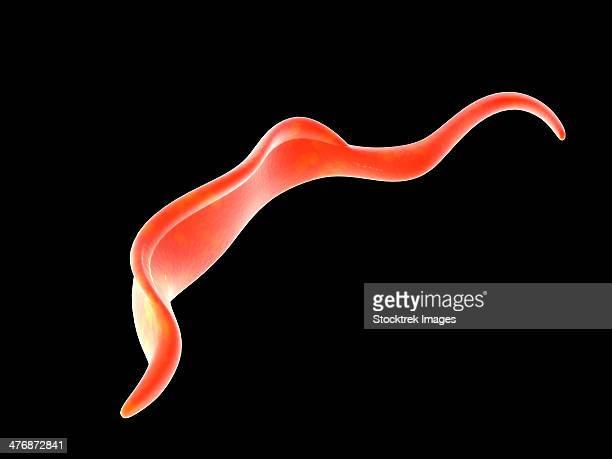 Conceptual image of Trypanosoma.
