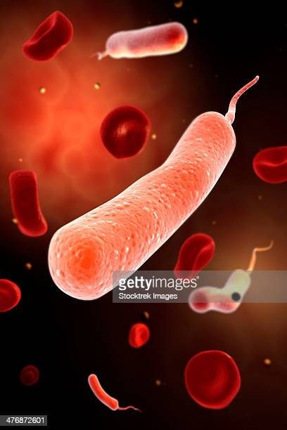 conceptual image of vibrio cholerae causing cholera. - anaerobic stock illustrations, clip art, cartoons, & icons