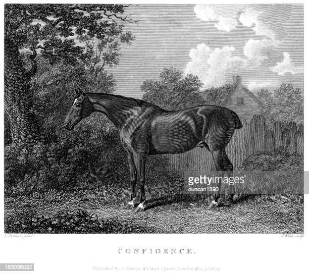 stockillustraties, clipart, cartoons en iconen met confidence racehorse - military