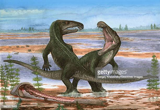 Confrontation between Archosaurus rossicus, a prehistoric animal from the Paleozoic era.