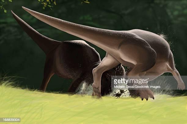 Confrontation between two Pachycephalosaurus dinosaurs.