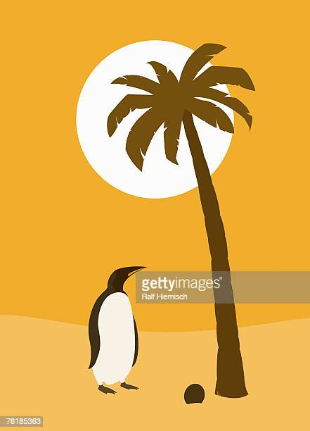 a confused penguin standing under a palm tree - out of context点のイラスト素材/クリップアート素材/マンガ素材/アイコン素材