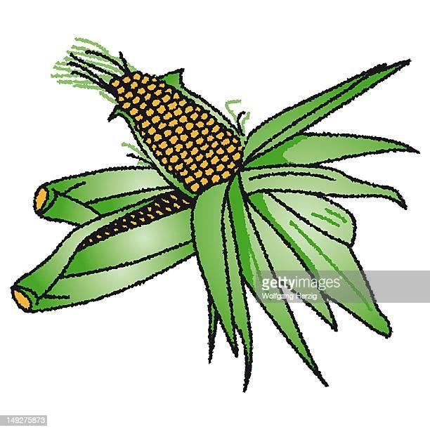 corn - husk stock illustrations, clip art, cartoons, & icons