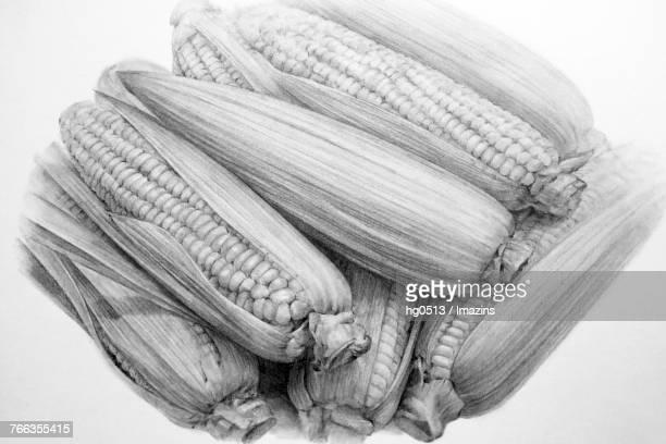 corn pencil drawing - zea stock illustrations, clip art, cartoons, & icons