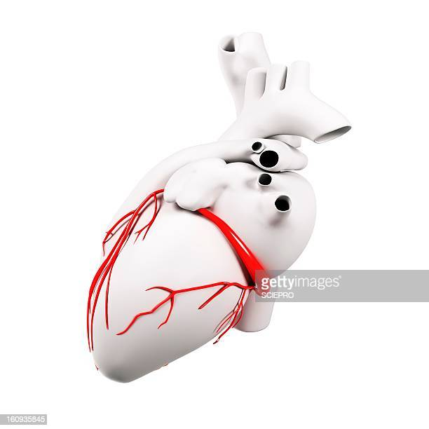coronary arteries, artwork - coronary artery stock illustrations, clip art, cartoons, & icons