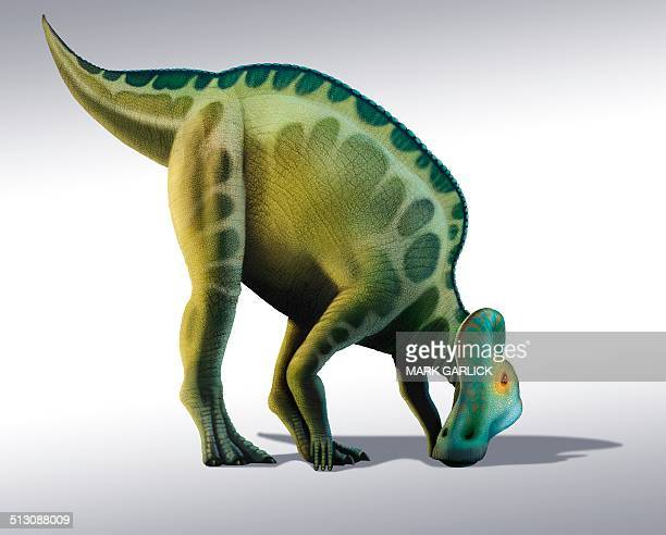 corythosaurus dinosaur, artwork - hadrosaurid stock illustrations, clip art, cartoons, & icons