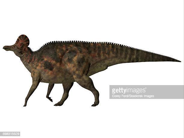 corythosaurus duck-billed dinosaur. - corythosaurus casuarius stock illustrations, clip art, cartoons, & icons