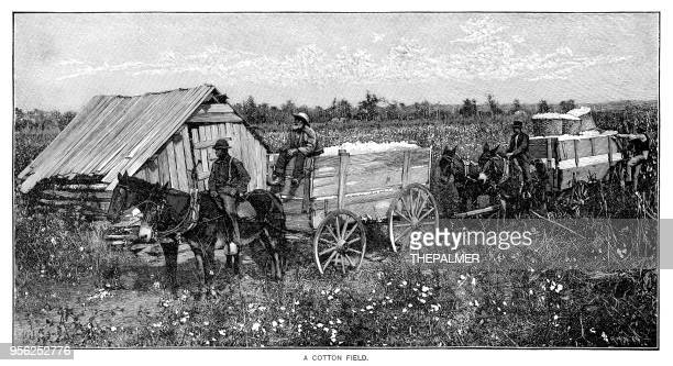 Cotton field engraving 1895