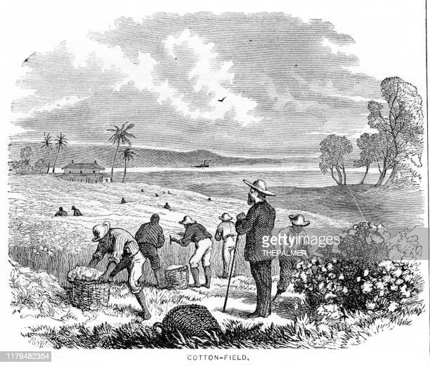 illustrations, cliparts, dessins animés et icônes de sélection de coton états-unis gravure 1881 - image du xixème siècle