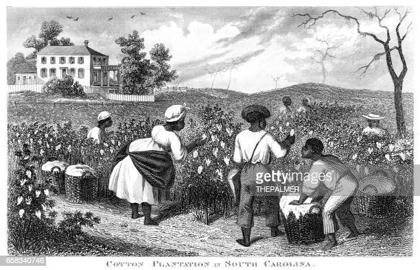 cotton plantation usa engraving 1873 - southern usa stock illustrations, clip art, cartoons, & icons