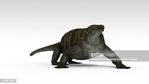 Cotylorhynchus, a large synapsid of the Early Permian period.