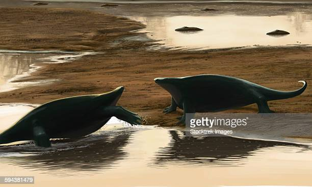 Cotylorhynchus confrontation on the waters edge.