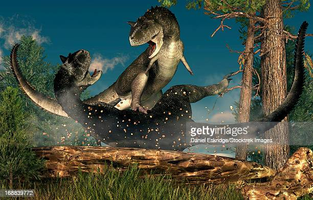 A couple of Carnotaurus dinosaurs fighting.