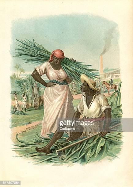 サトウキビ1880を収穫キューバの奴隷のカップル - アンティル諸島点のイラスト素材/クリップアート素材/マンガ素材/アイコン素材