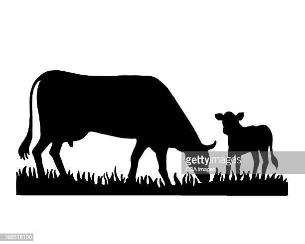 cow and a calf - calf stock illustrations, clip art, cartoons, & icons