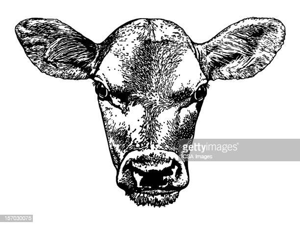 cow head - one animal stock illustrations