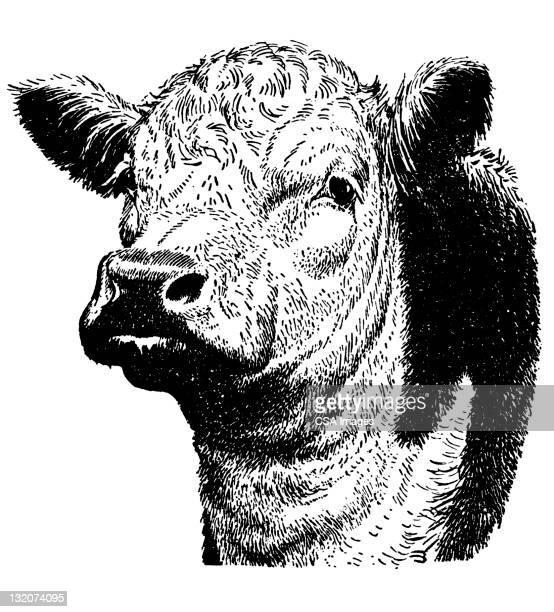 illustrations, cliparts, dessins animés et icônes de de vache - vache