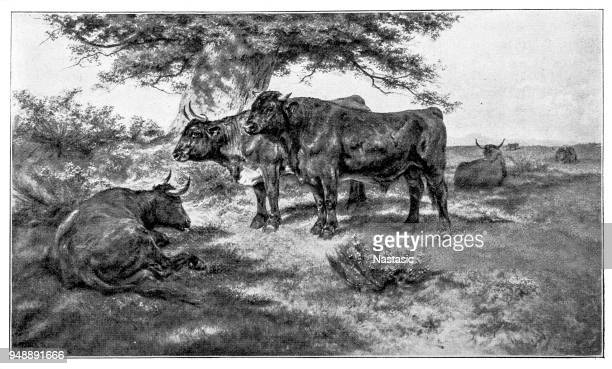 cows and bull in the auvergne - milking stock illustrations, clip art, cartoons, & icons