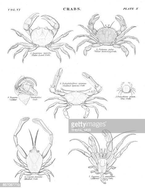 Crabs engraving 1884