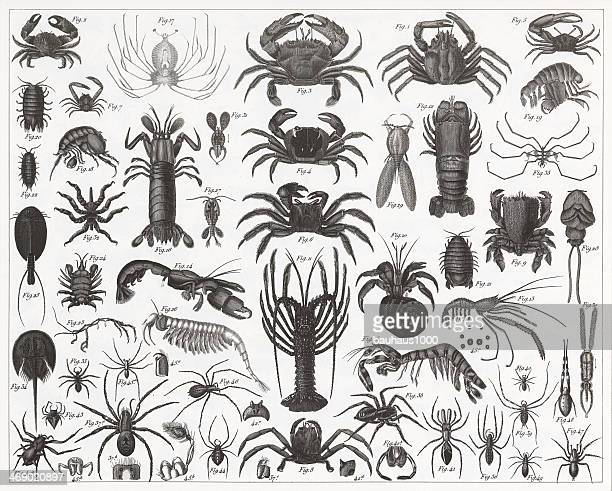 Crabs, Shrimp and Spiders Engraving