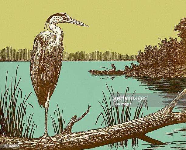 crane bird - crane bird stock illustrations