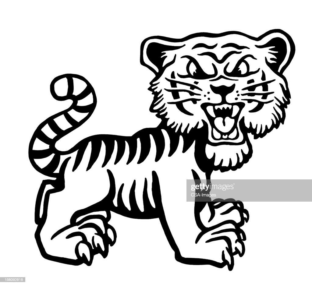 Cranky Tiger