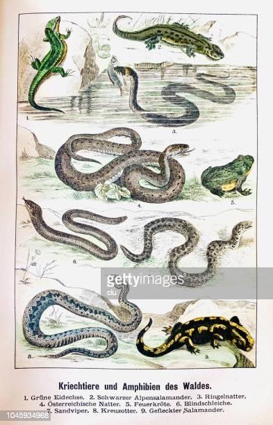 ilustrações, clipart, desenhos animados e ícones de crawlies e anfíbios da floresta - réptil