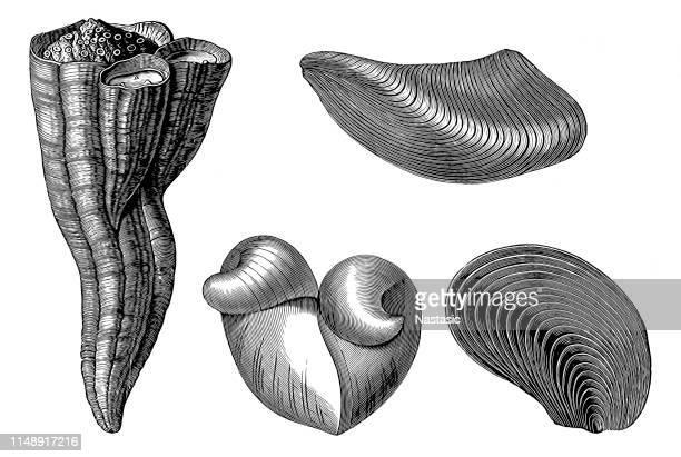 Cretaceous fossil