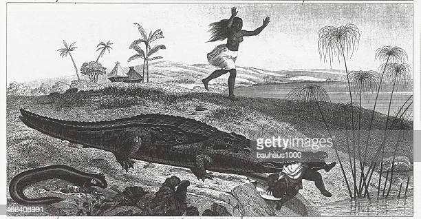 Crocodile Eating a Child Engraving