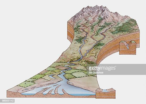 Cross section illustration of river valley in mountains with freshwater flowing down to form estuary and delta