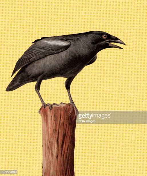ilustraciones, imágenes clip art, dibujos animados e iconos de stock de crow on a contabilizar - cuervo