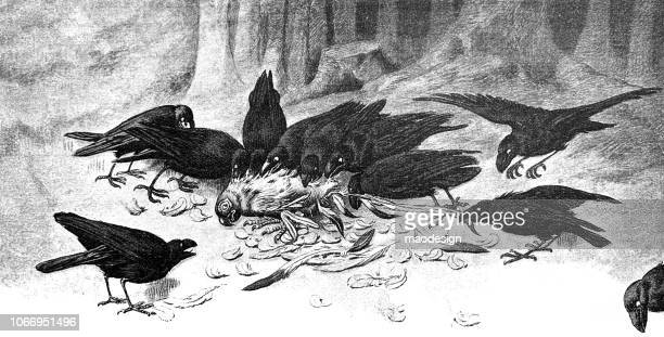 ilustraciones, imágenes clip art, dibujos animados e iconos de stock de cuervos son rasgado palomas a pedazos - cuervo