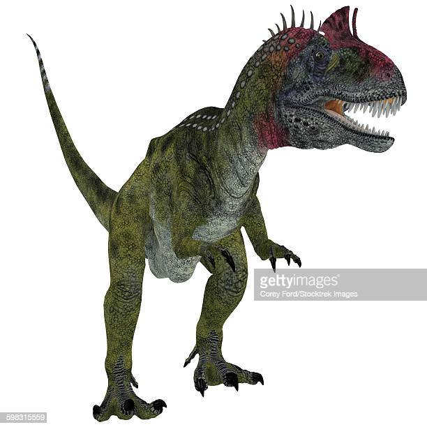 Cryolophosaurus dinosaur, white background.