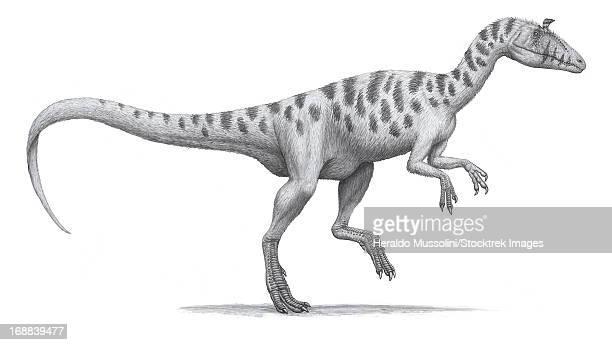 Cryolophosaurus elliotti, a large theropod dinosaur.