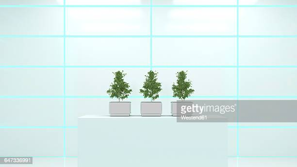 Cultivated ginko trees in a laoratory, 3D Rendering